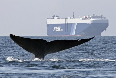 la-sci-sn-ships-slow-down-whales-pollution-20140805
